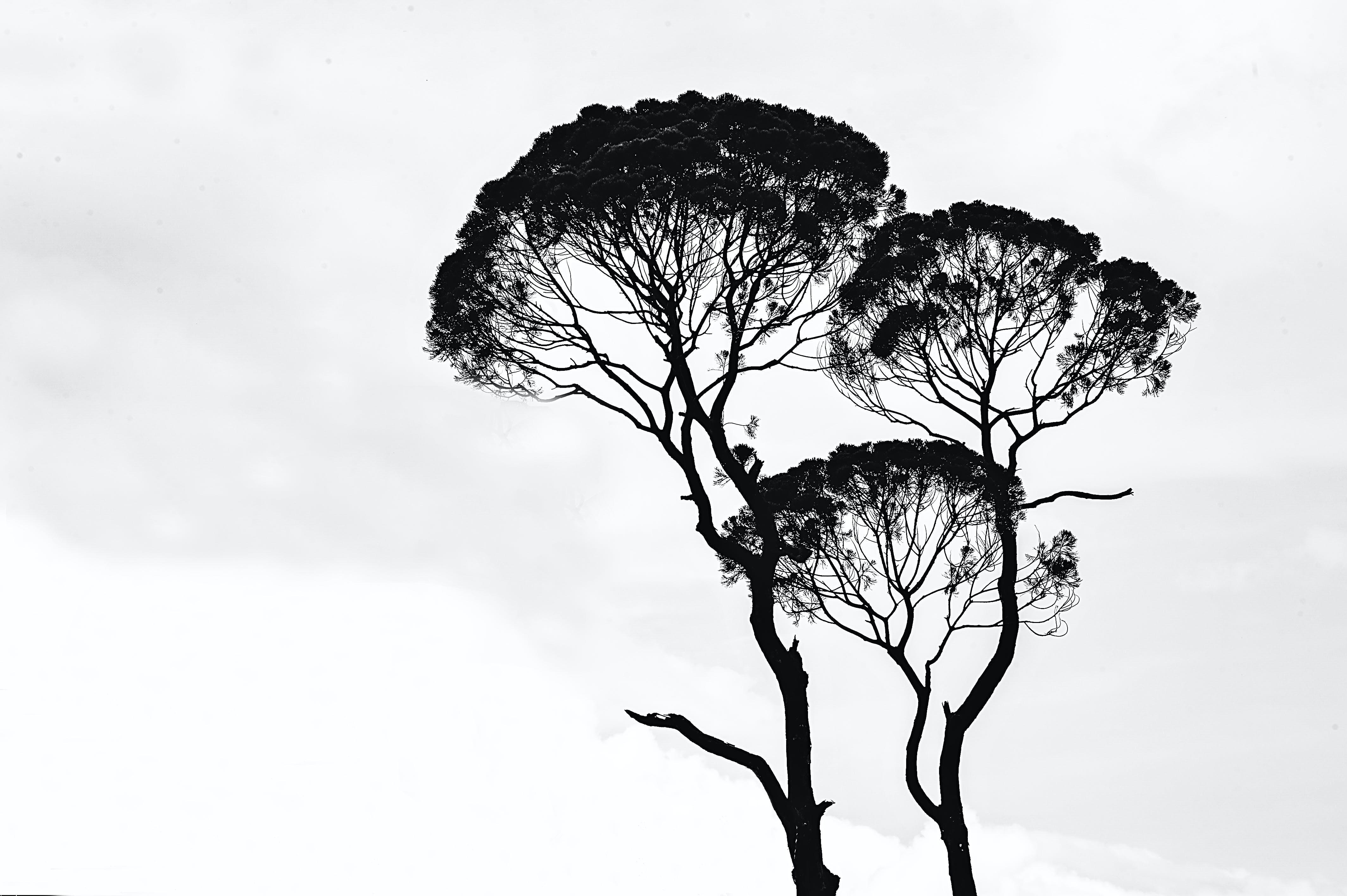 äste, bäume, baumstamm