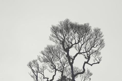 Monochrome Photography of Bare Tree