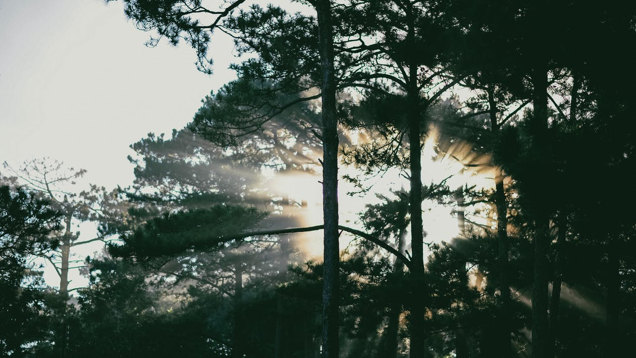 alvorecer, amanhecer, árvores