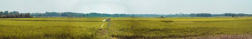 Gratis stockfoto met akkerland, boerderij, boom, daglicht