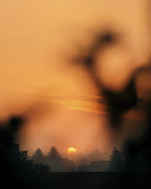Sun Setting over the Trees