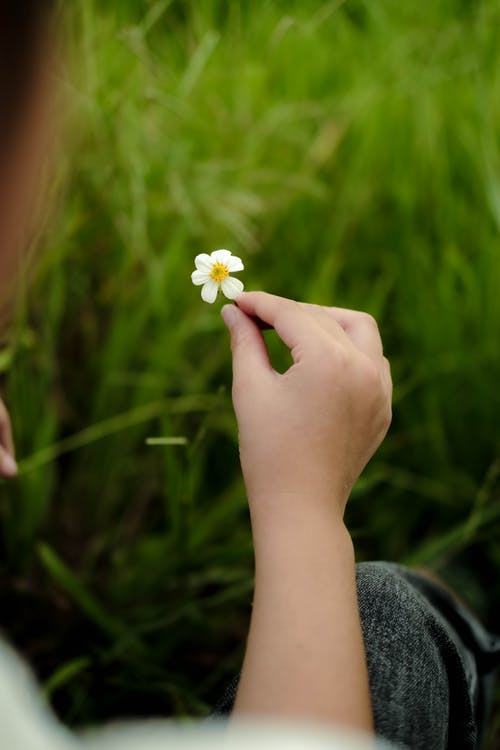 Close-Up Photo of a Person Holding a Small White Flower
