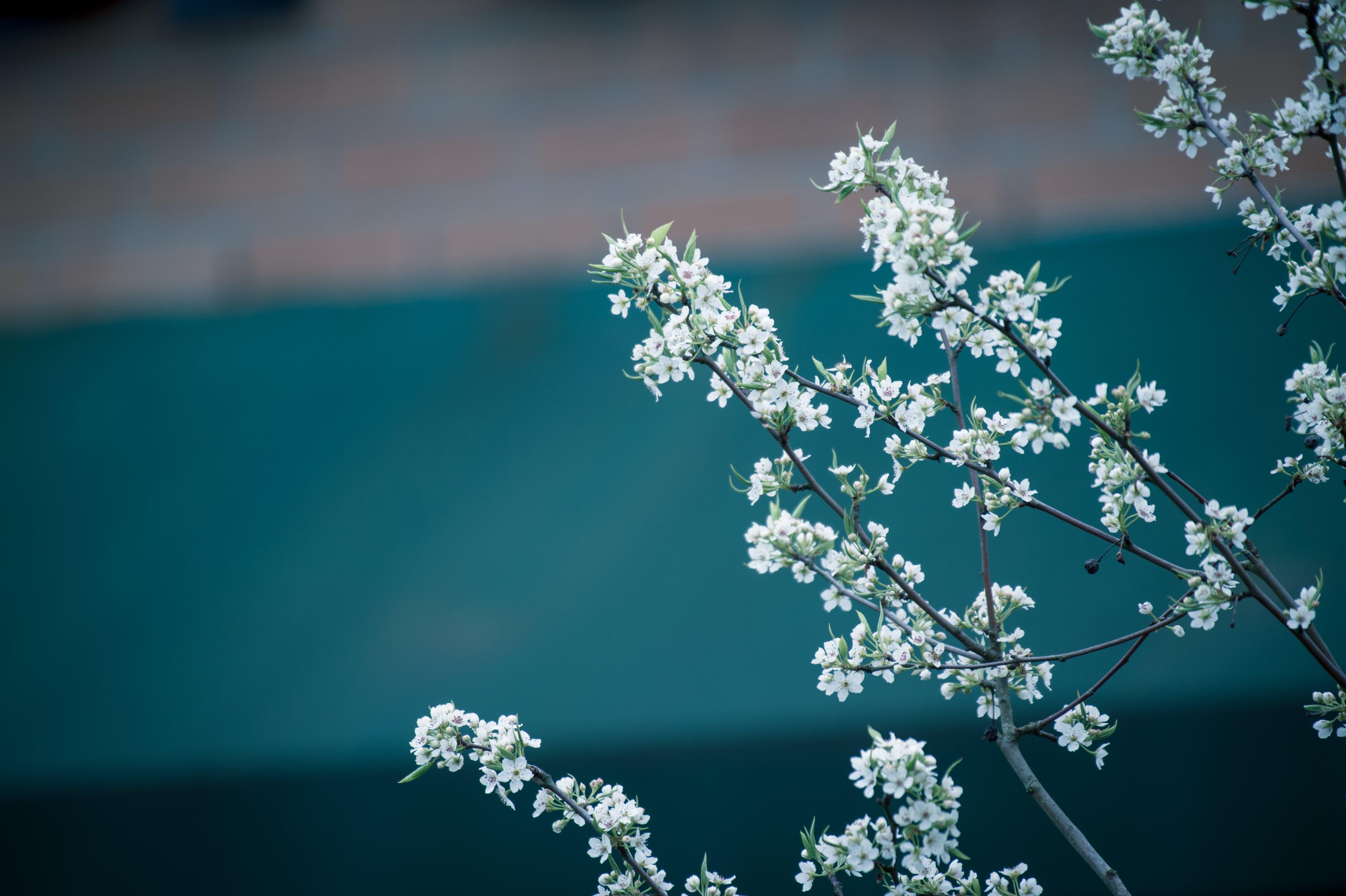 Základová fotografie zdarma na téma barvy, flóra, krásný, kvést