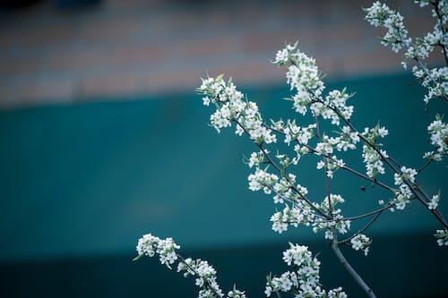 bitki örtüsü, bulanık arka plan, büyüme, Çiçek açmak içeren Ücretsiz stok fotoğraf