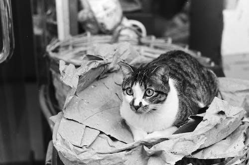 Foto In Scala Di Grigi Di Tabby Cat