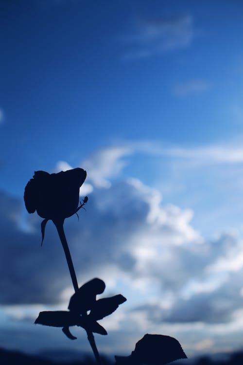 Immagine gratuita di acqua, alba, cielo azzurro