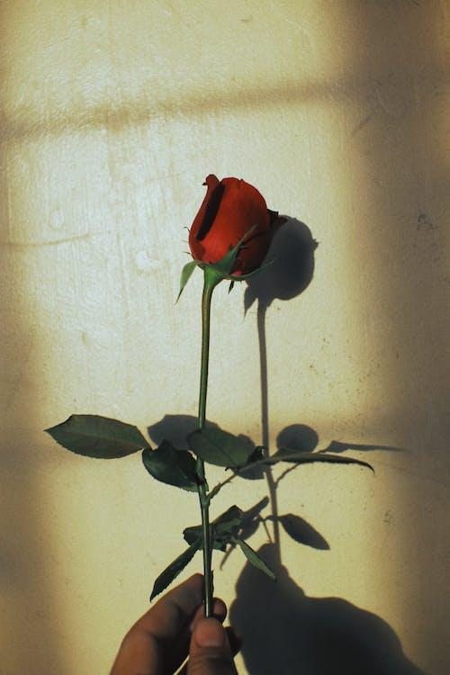 Immagine gratuita di amore, arte, artistico