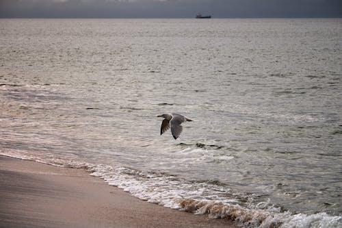 Free stock photo of animal, beach, chill
