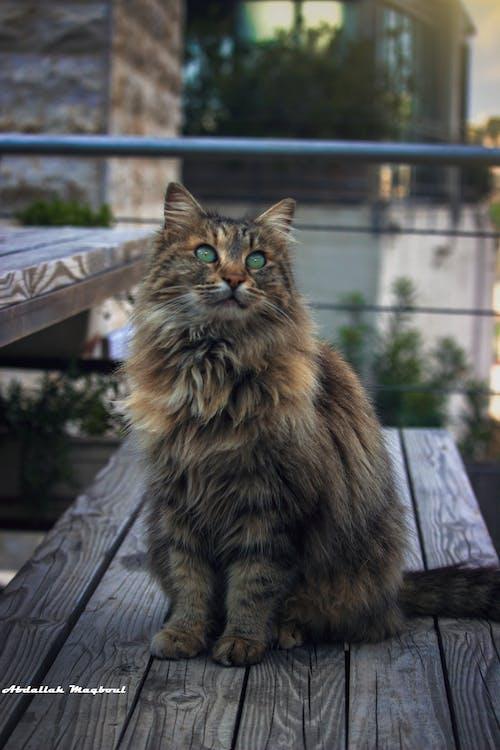 Gratis stockfoto met beest, dierenwereld, kat, katten