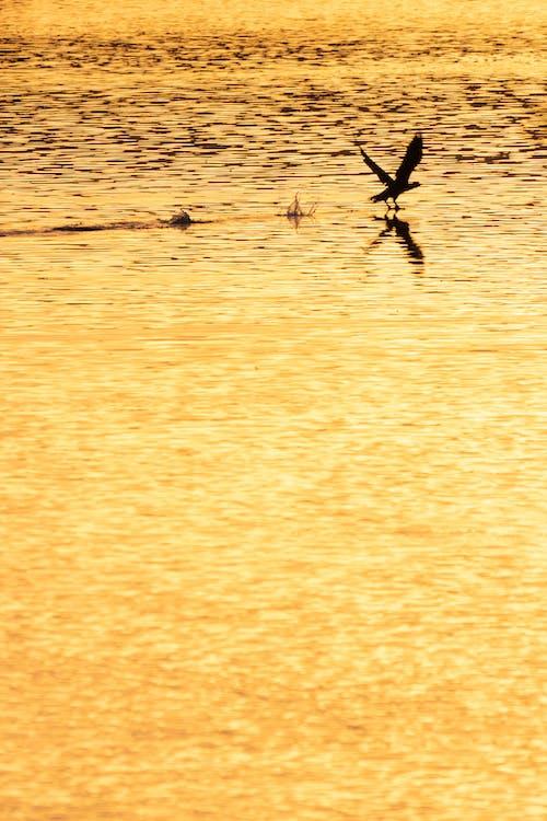 คลังภาพถ่ายฟรี ของ ทอง, นก, พระอาทิตย์ขึ้น
