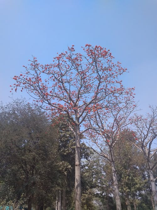 Blooming tree in park on fine day