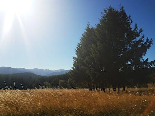 ağaçlar, güneş ışığı, manzara içeren Ücretsiz stok fotoğraf