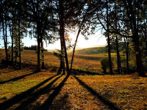Darmowe zdjęcie z galerii z drzewa, krajobraz, pole uprawne, sceneria