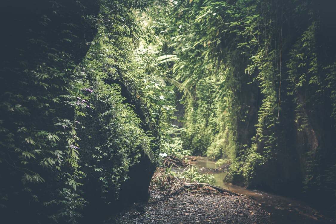 Cave Filed With Green Plants