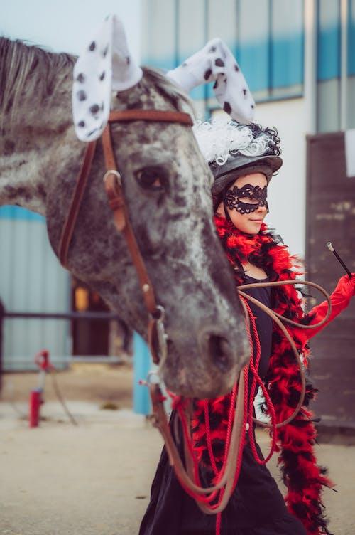 Photos gratuites de amusement, assis, cavalerie