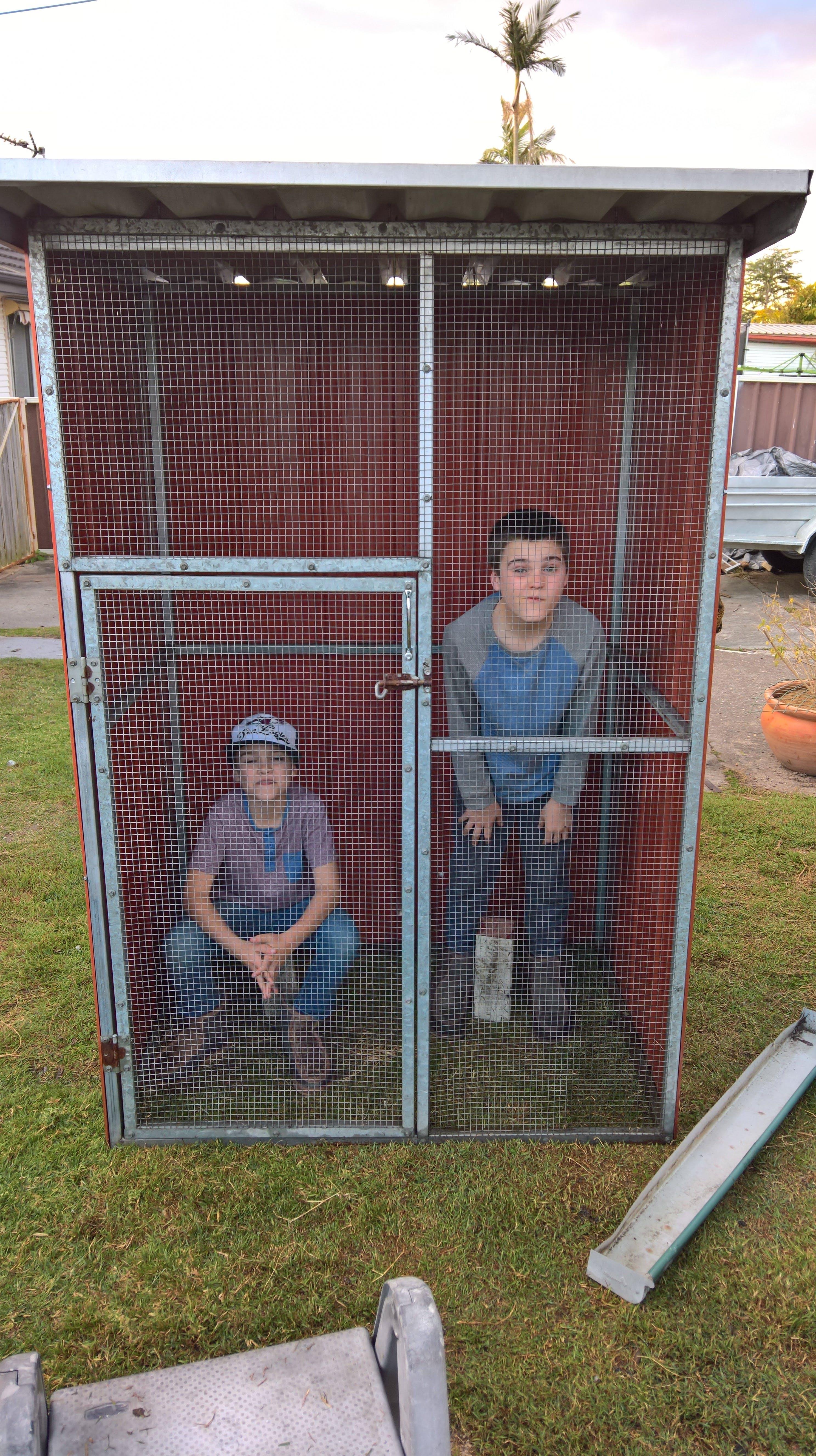 Free stock photo of bird aviary, caged animals, kids