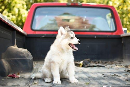 Darmowe zdjęcie z galerii z ciężarówka, czekać, jesień