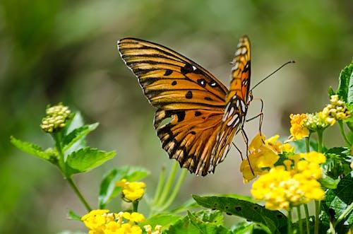動物, 天性, 翅膀, 花 的 免費圖庫相片