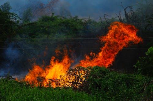 Burning Woods on Green Grass Field