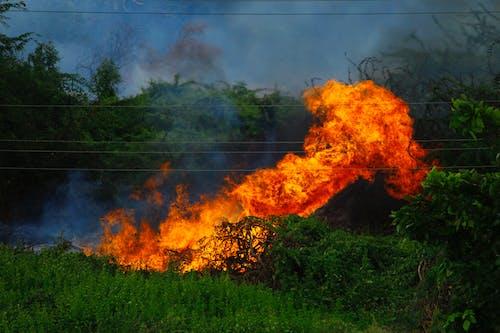 Fire on Green Grass Field