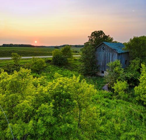 Photos gratuites de abandonné, agriculture, arbre