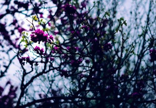 คลังภาพถ่ายฟรี ของ กลางแจ้ง, กลีบดอก, ก้าน, การท่องเที่ยว