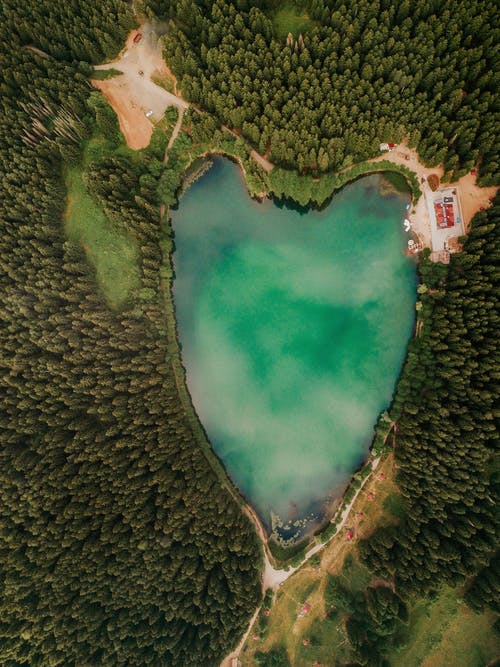 Δωρεάν στοκ φωτογραφιών με ακριβώς πάνω, δασικός, δάσος
