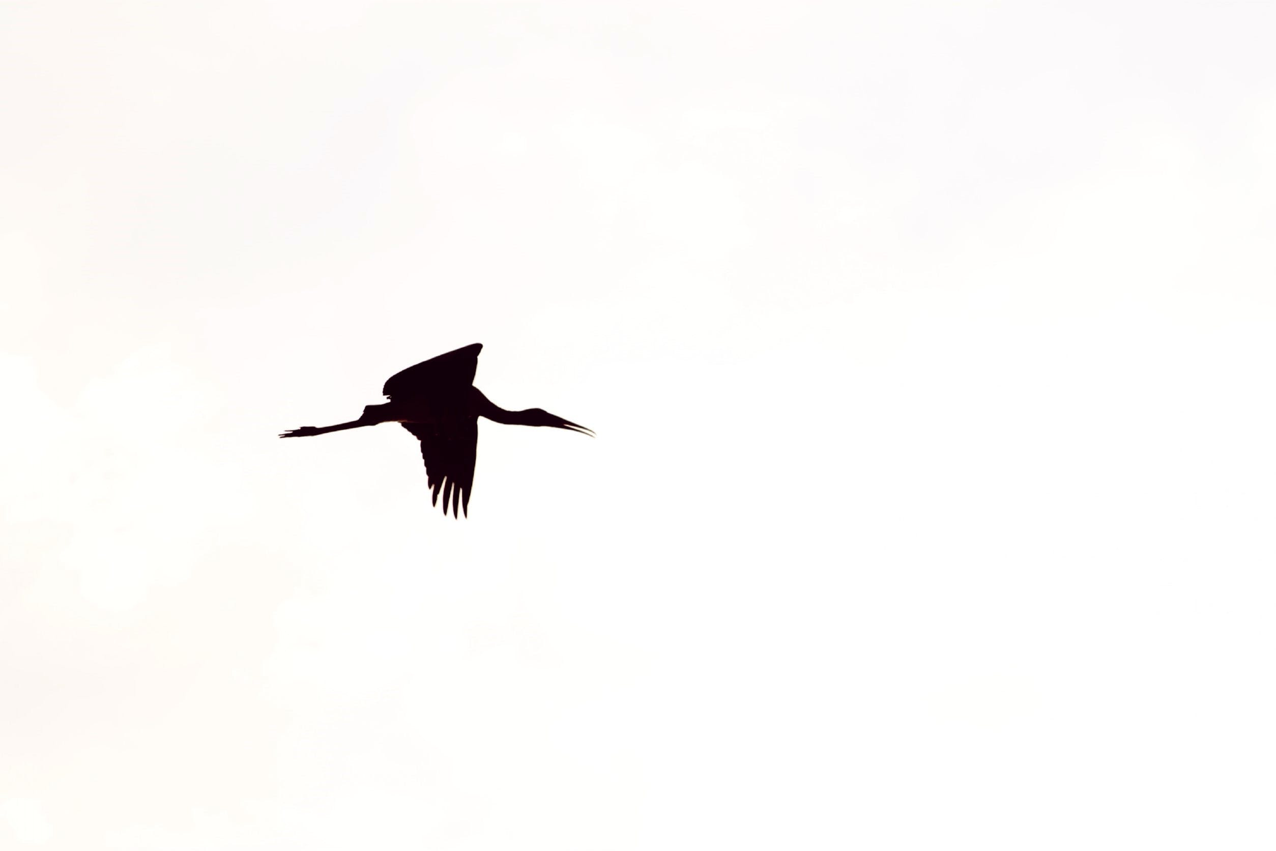 Free stock photo of flight, bird, flying, lake
