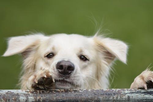 おもしろい, ペット, 丁寧なの無料の写真素材