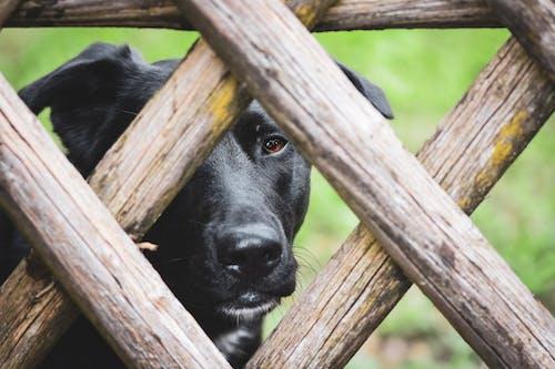 おもしろい, フェンス, ペットの無料の写真素材
