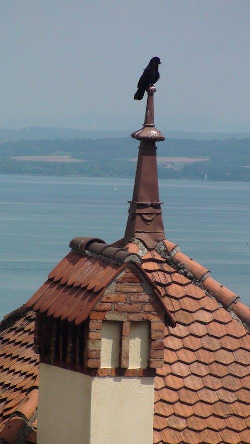 aves, iago içeren Ücretsiz stok fotoğraf