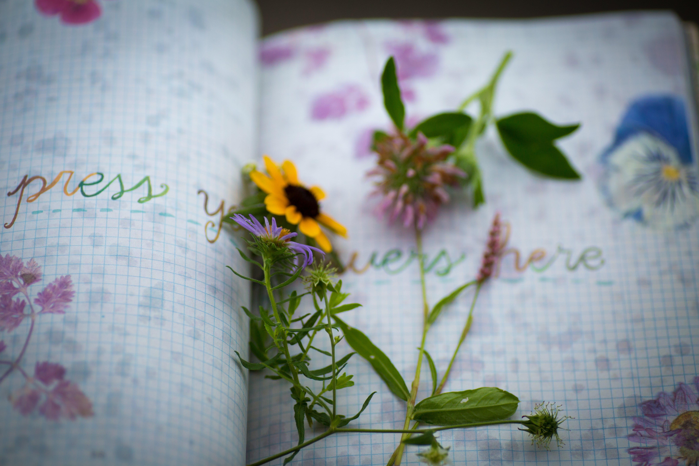 Free stock photo of diary, emotion, flower, keepsake