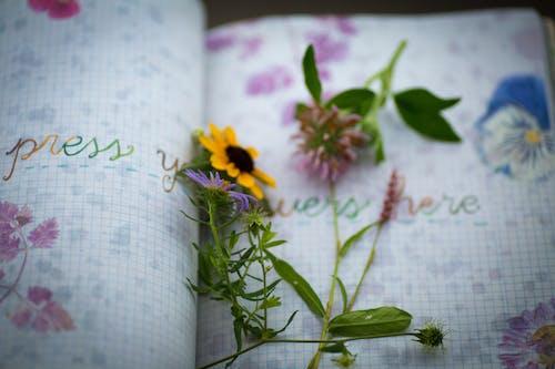 Δωρεάν στοκ φωτογραφιών με βιβλίο τύπου, ενθύμιο, ημερολόγιο, κίτρινο άνθος