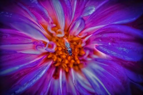 Darmowe zdjęcie z galerii z delikatny, egzotyczny, flora