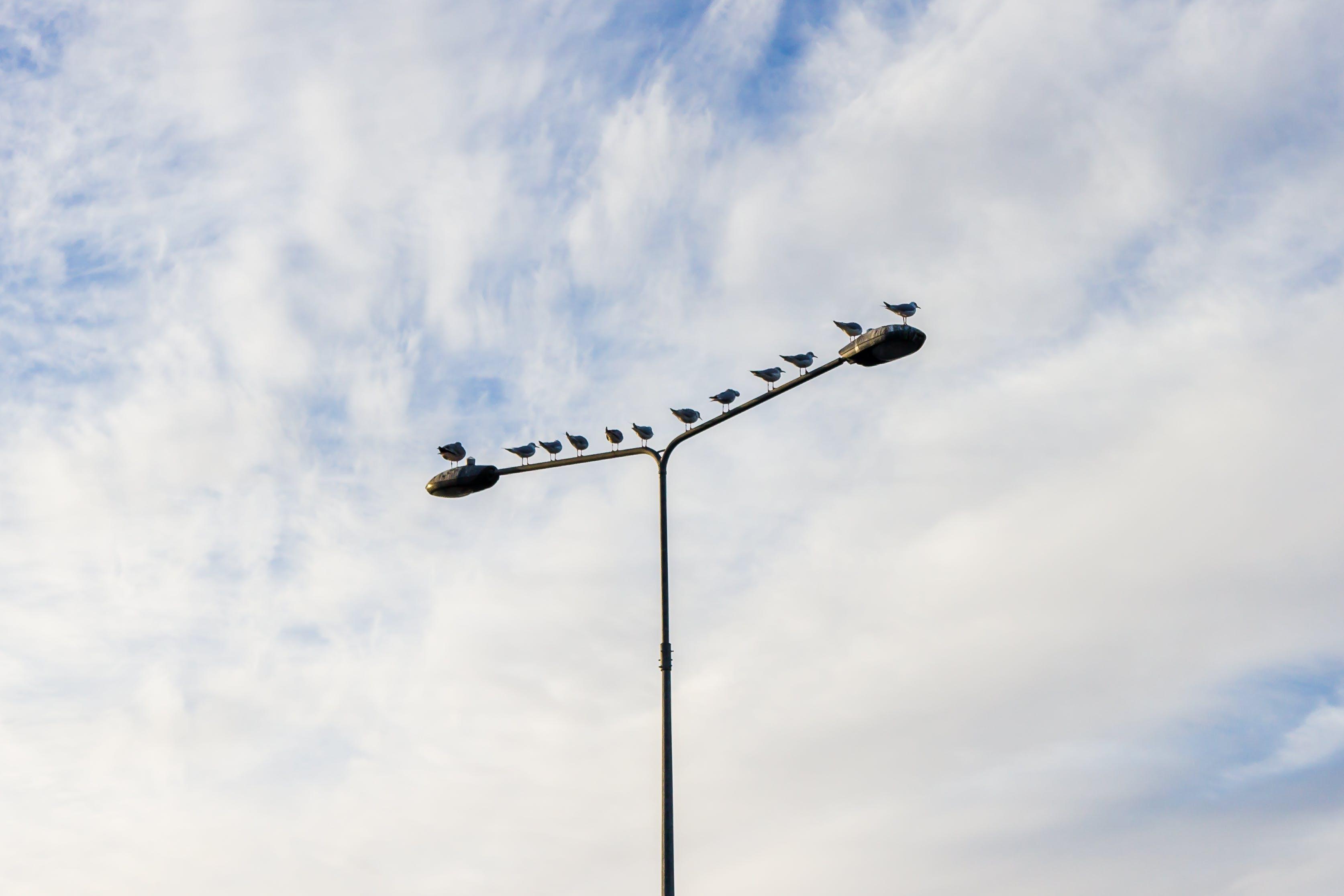 Free stock photo of #pole #sky #birds #clouds #mnimalist