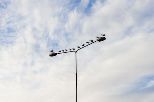 Kostnadsfri bild av #pole #sky #birds #clouds #mnimalist