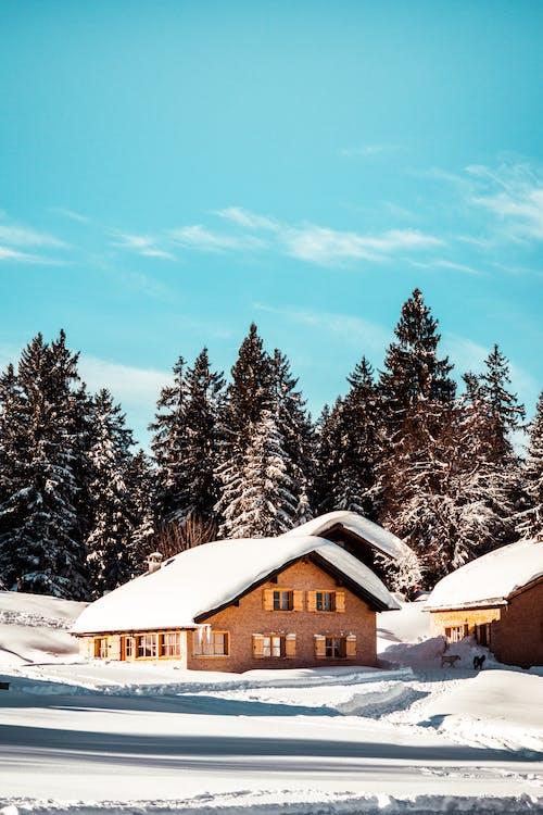 Δωρεάν στοκ φωτογραφιών με γαλάζιος ουρανός, δέντρα, καλύβα, κρύο
