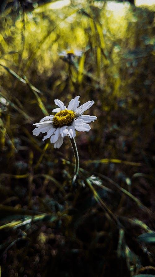 Kostenloses Stock Foto zu blume, dunkelgrüne pflanzen, fotografie