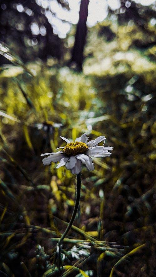 Kostenloses Stock Foto zu blume, dunkelgrüne pflanzen, foto