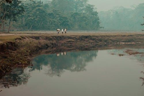 Gratis stockfoto met bos rivier, mensen, mist