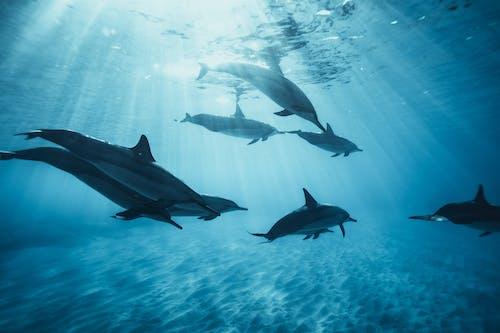 動物, 哺乳動物, 天性 的 免費圖庫相片