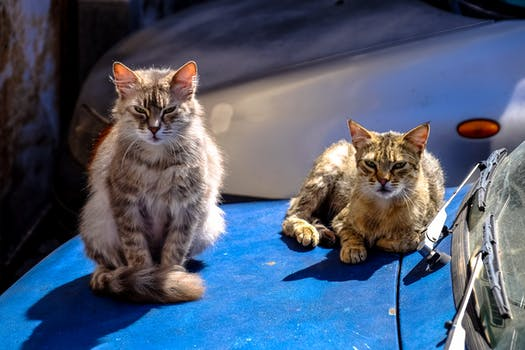 Two Orange Cats Standing And Sitting On Pavement