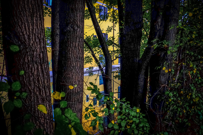Trees Near Yellow Building