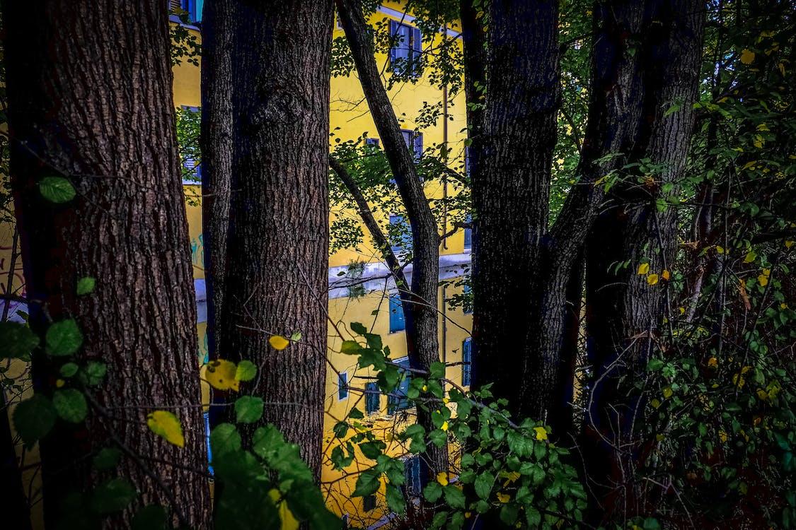 ветви, деревья, дневной свет