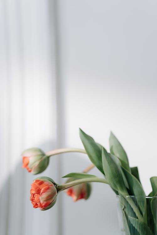 Základová fotografie zdarma na téma bílá, čekající, interiér