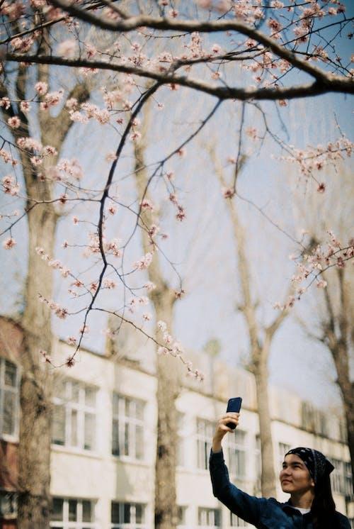 Gratis lagerfoto af 35 mm, blomstrende, filmfotografering