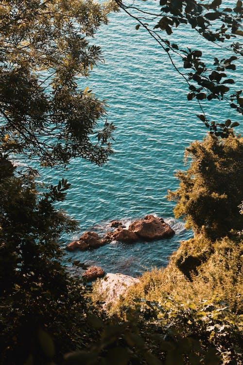 Fotobanka sbezplatnými fotkami na tému listy, more, oceán