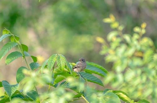 Immagine gratuita di ali, foglia verde, fotografia di animali