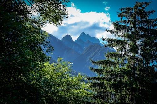 Mountains Across Green Trees