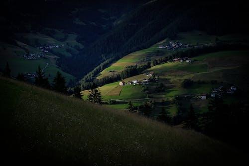 ağaçlar, alan, çim, yeşil içeren Ücretsiz stok fotoğraf
